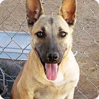 Adopt A Pet :: Lilly - San Tan Valley, AZ