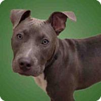 Adopt A Pet :: *ZORRO - Upper Marlboro, MD