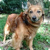 Adopt A Pet :: Danny - Capon Bridge, WV