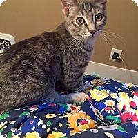 Adopt A Pet :: 3583 Dash - SA - Council Bluffs, IA