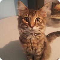 Adopt A Pet :: Heather - Livonia, MI