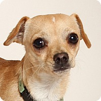Adopt A Pet :: Rex - Walnut Creek, CA