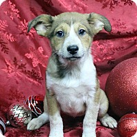Adopt A Pet :: ZOE - Westminster, CO