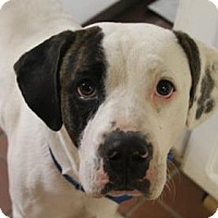 Adopt A Pet :: Hooper - Daytona Beach, FL