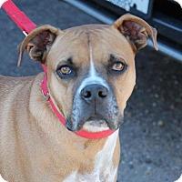 Adopt A Pet :: Colt - Denver, CO