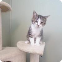 Adopt A Pet :: Bambi - Montello, WI