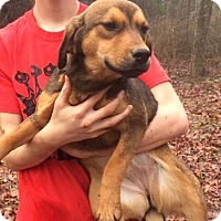 Adopt A Pet :: Sally meet me 1/20 - Manchester, CT