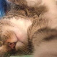 Adopt A Pet :: DAISY - Bayside, NY
