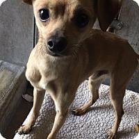 Adopt A Pet :: Eugene - Chula Vista, CA