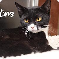 Adopt A Pet :: Faline - Media, PA