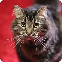 Adopt A Pet :: Willie - Chippewa Falls, WI