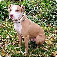 Adopt A Pet :: Payton - Chicago, IL