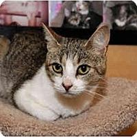 Adopt A Pet :: Darla - Farmingdale, NY