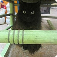 Adopt A Pet :: Holly - Mobile, AL