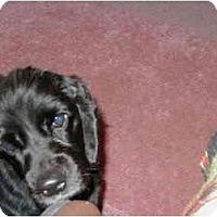 Adopt A Pet :: Miss Minnie (M&M) - Wellington, OH