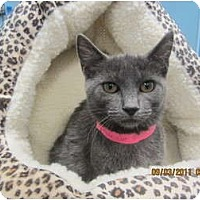Adopt A Pet :: Mink - Sterling Hgts, MI
