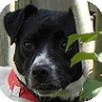 Adopt A Pet :: Martie - Hamilton, ON