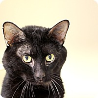 Adopt A Pet :: Faramir - Chicago, IL