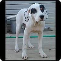 Adopt A Pet :: Roosevelt-ADOPTION PENDING! - Columbus, OH
