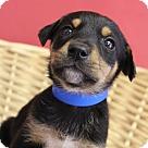 Adopt A Pet :: Keith