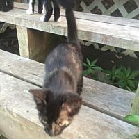 Adopt A Pet :: Zisa - Clarkson, KY
