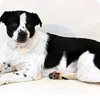Adopt A Pet :: Mystery - Needs Foster - Bloomington, MN