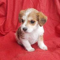 Adopt A Pet :: ANGIE - richmond, VA