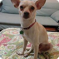 Adopt A Pet :: Rocko - Fort Lauderdale, FL