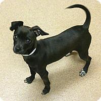 Adopt A Pet :: Magoo - Oakland, CA