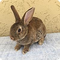 Adopt A Pet :: Terry - Bonita, CA