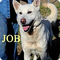 Adopt A Pet :: Job - Halifax, NC