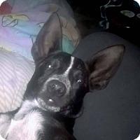 Adopt A Pet :: GUSS - Gustine, CA