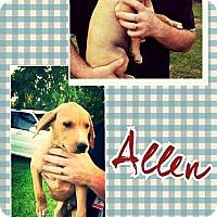 Adopt A Pet :: Allen meet me 9/9 - Manchester, CT