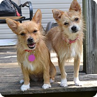 Adopt A Pet :: Tia & Tamara - Westport, CT
