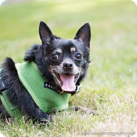 Adopt A Pet :: Bubba - East Hartford, CT