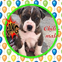 Adopt A Pet :: Chili - siler city, NC