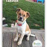 Adopt A Pet :: Takoda - Plainfield, IL