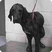 Adopt A Pet :: FAITH - Conroe, TX