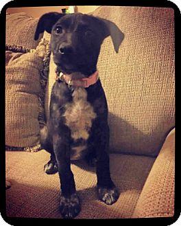 Labrador Retriever Mix Dog for adoption in Grand Bay, Alabama - TINK