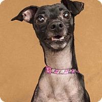 Adopt A Pet :: Elle - Davis, CA