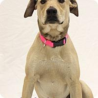 Adopt A Pet :: Shiloh - Bradenton, FL