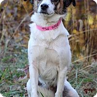 Adopt A Pet :: Mia - Waldorf, MD