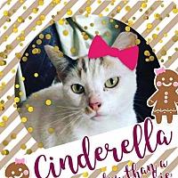 Calico Cat for adoption in Waldorf, Maryland - Cinderella