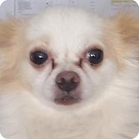 Adopt A Pet :: Conrad - Bloomington, IL