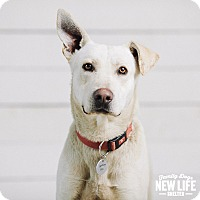 Adopt A Pet :: Whiskey - Portland, OR