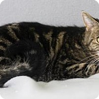 Adopt A Pet :: Willow - Blackwood, NJ