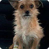 Adopt A Pet :: Tootie - Mary Esther, FL