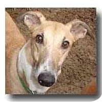 Adopt A Pet :: Tony - Roanoke, VA