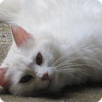 Adopt A Pet :: Bunny - Easley, SC