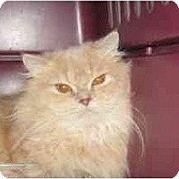 Adopt A Pet :: Slick - Clay, NY